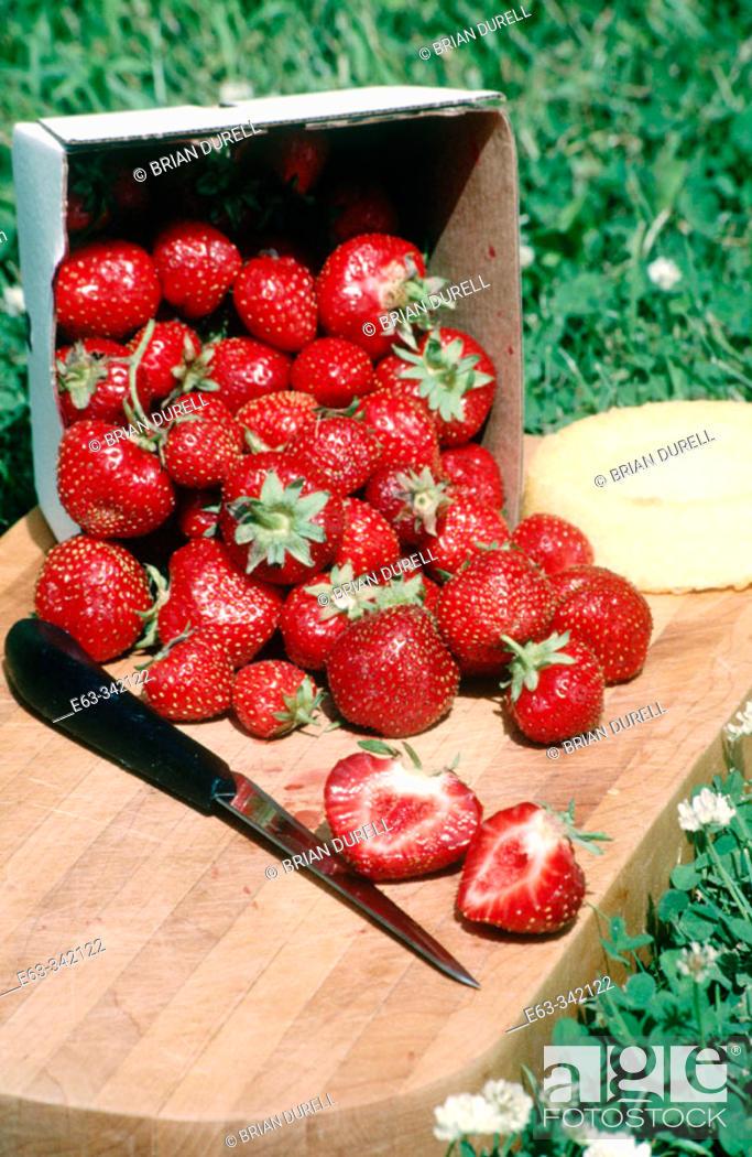 Stock Photo: Strawberry (Fragaria sp.). Boston Mills, Ontario. Canada.