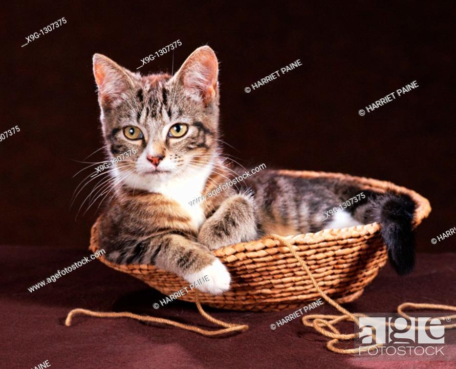 Stock Photo: Cat in wicker basket.