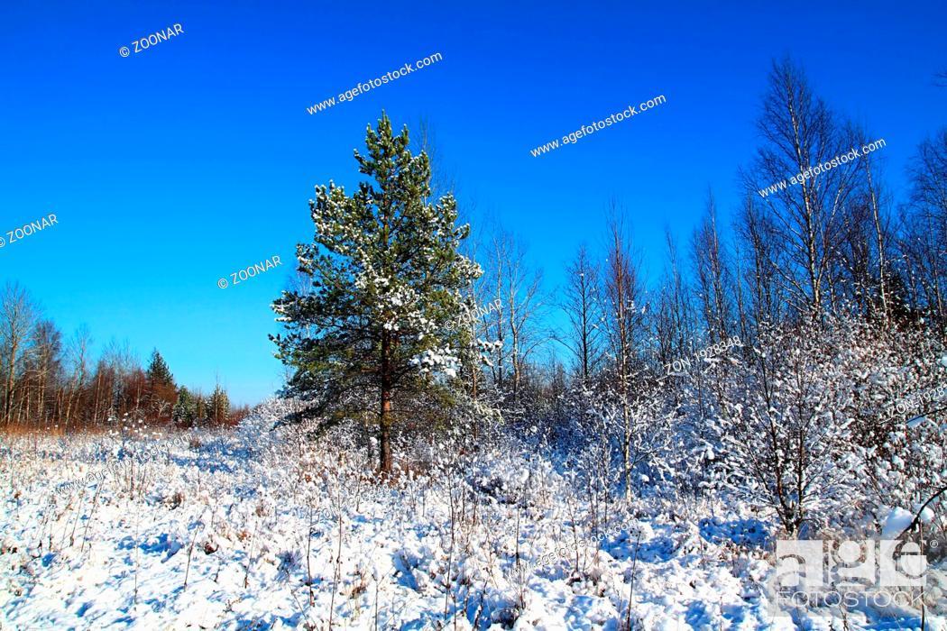 Stock Photo: small pine on winter field.