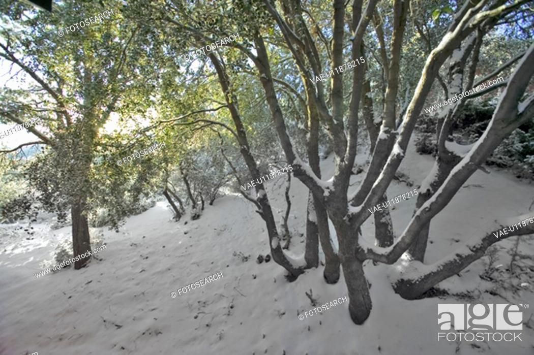 Stock Photo: Snowy setting after fresh winter storm.