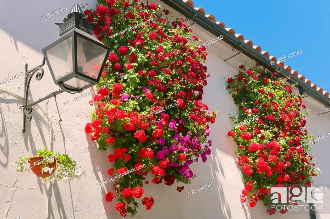 Stock Photo: Windows and flowers, Cordoba, Region of Andalusia, Spain, Europe.