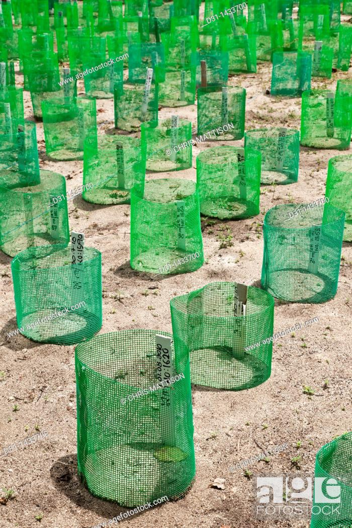 Stock Photo: Artificial turtle nests at the turtle hatchery, Bakkungan Kecil, Sabah.