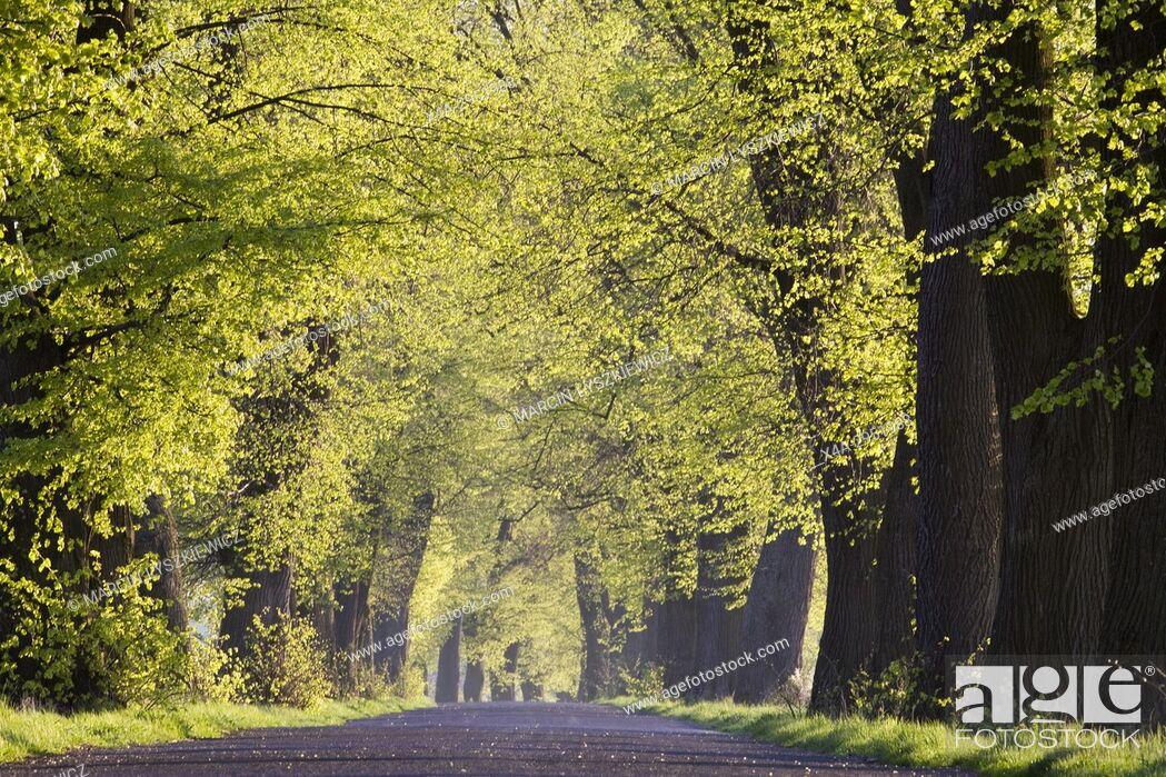 Stock Photo: Country Road in Spring, Kujawy, Poland.