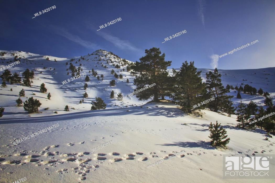 Stock Photo: Snowy Neila lagoon in Sierra de la Demanda, Burgos (Spain).