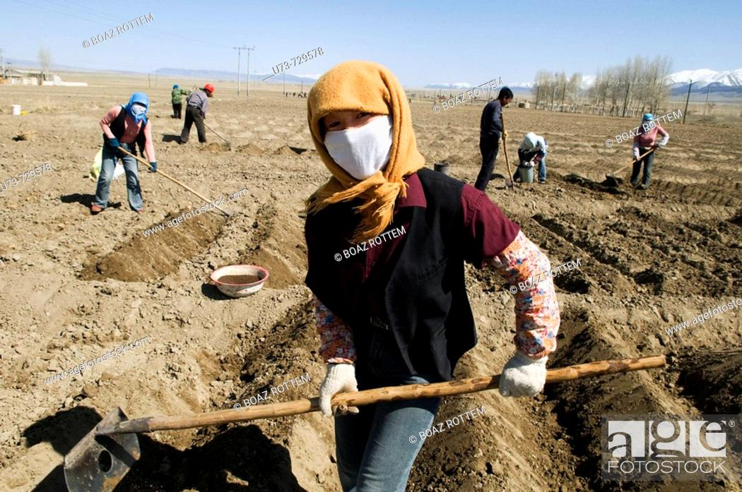 Stock Photo: Working in the potato fields in Kazakhstan.