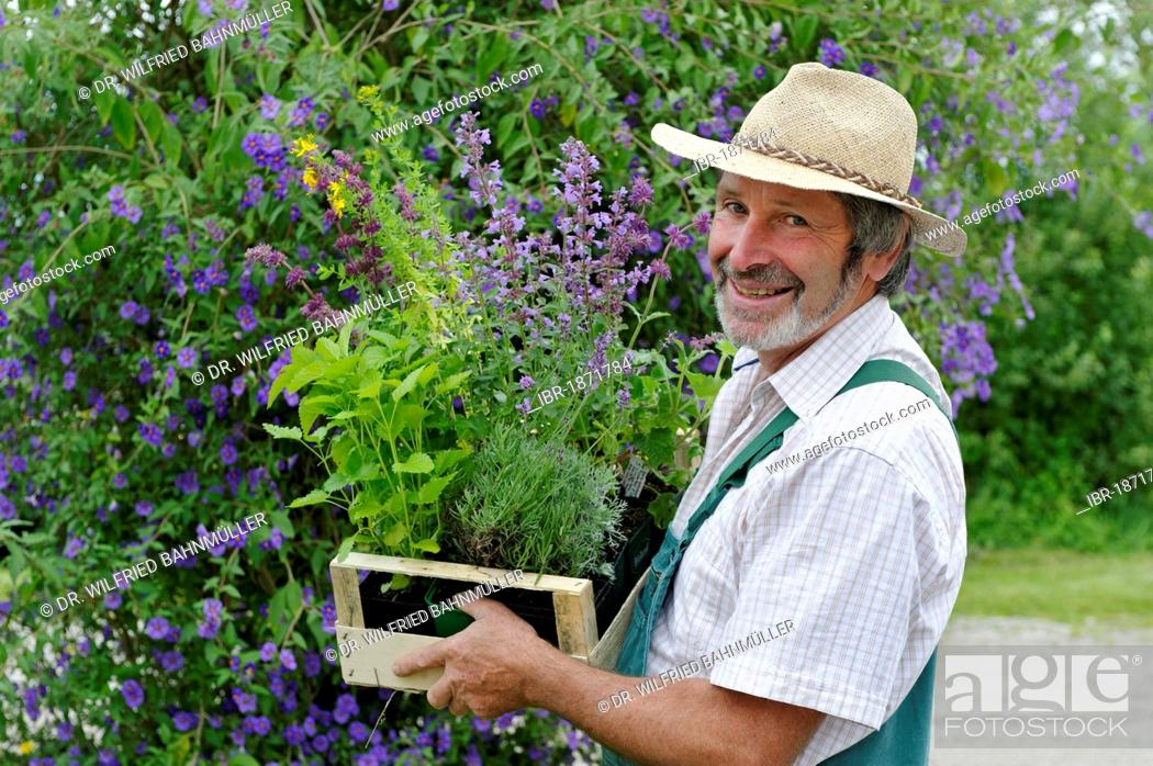 Stock Photo: Gardener with straw hat and a box of herbal plants.