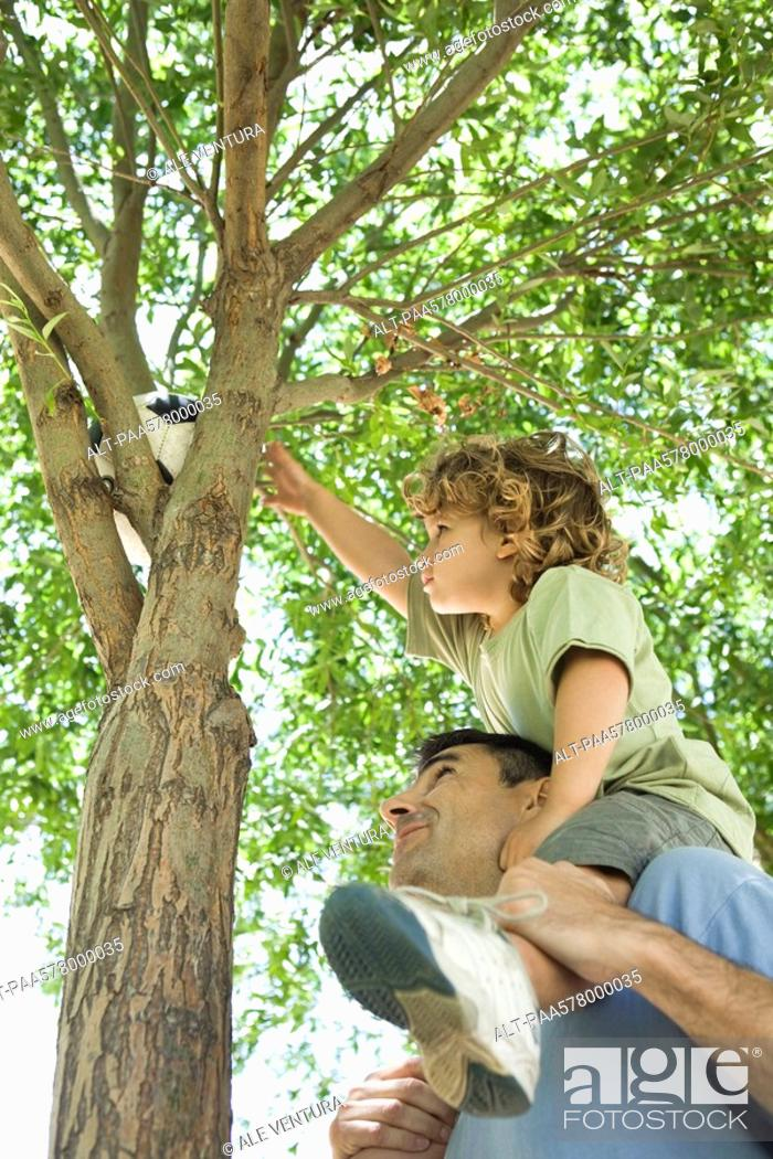 Stock Photo: Father helping son retrieve soccer ball stuck in tree.