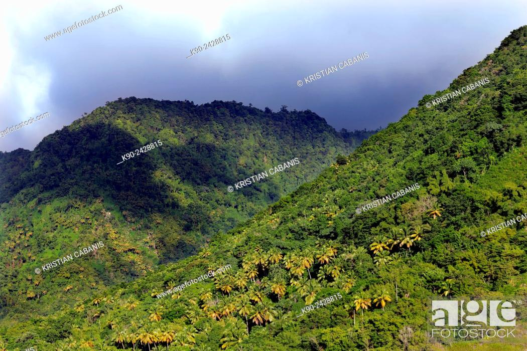 Stock Photo: Green mountain slope, St Lucia, Windward Islands, Lesser Antilles, Eastern Caribbean Islands, West Indies, Americas.