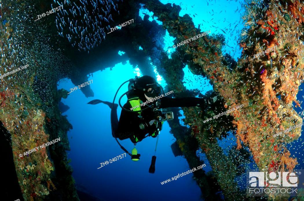 Stock Photo: Diver looking at wreckship Carnatik. Red Sea, Sharm El Sheikh, Egypt.
