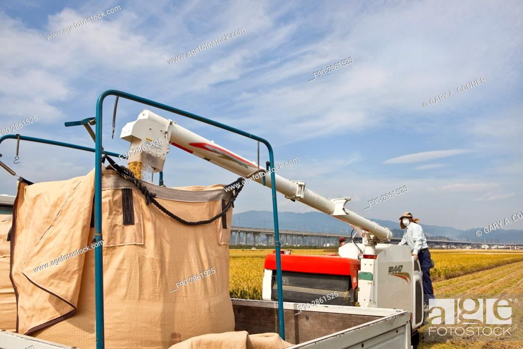 Imagen: Loading rice from combine in Tosu, Saga, Japan.