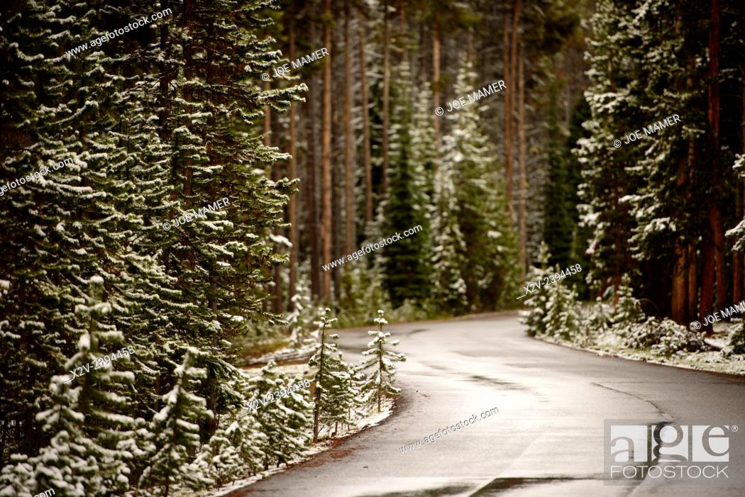 Photo de stock: Wet road through snow covered forest in Yellowstone National Park after June snowfall.