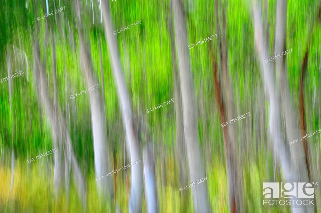 Stock Photo: blurred forest.