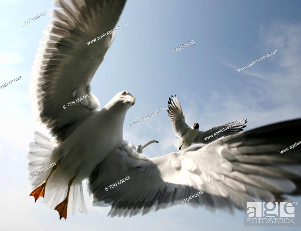 Stock Photo: seagulls at the dutch coastline.
