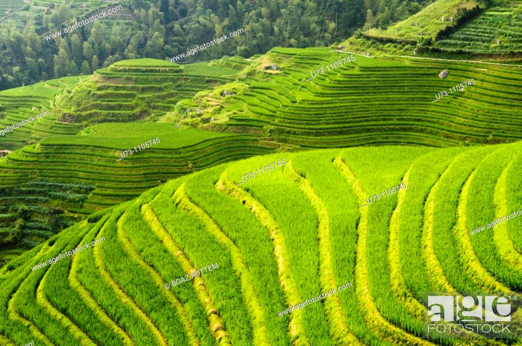 Stock Photo: Dramatic landscapes. The LongJi rice terraces in Guangxi, China.
