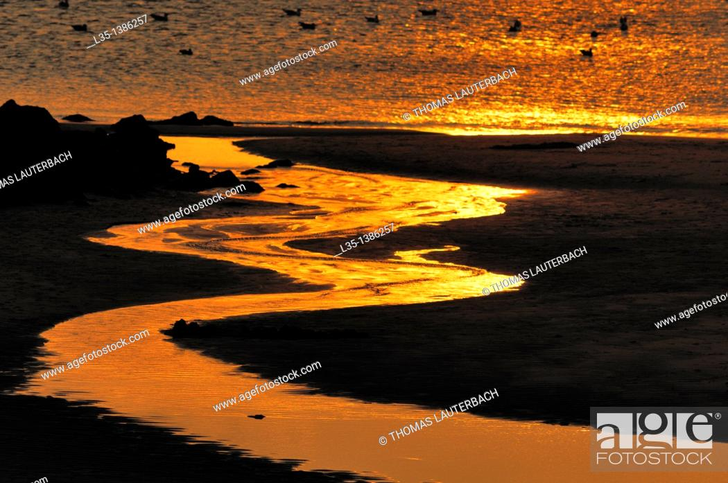 Stock Photo: At sunset, a shining rivulet, the North Sea in the background, Sylt, Germany.