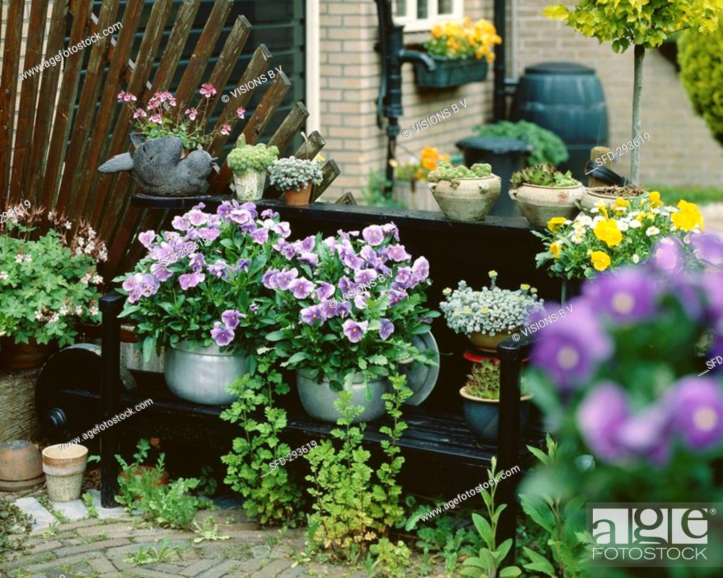 Stock Photo: Terrace with flowering plants in containers.
