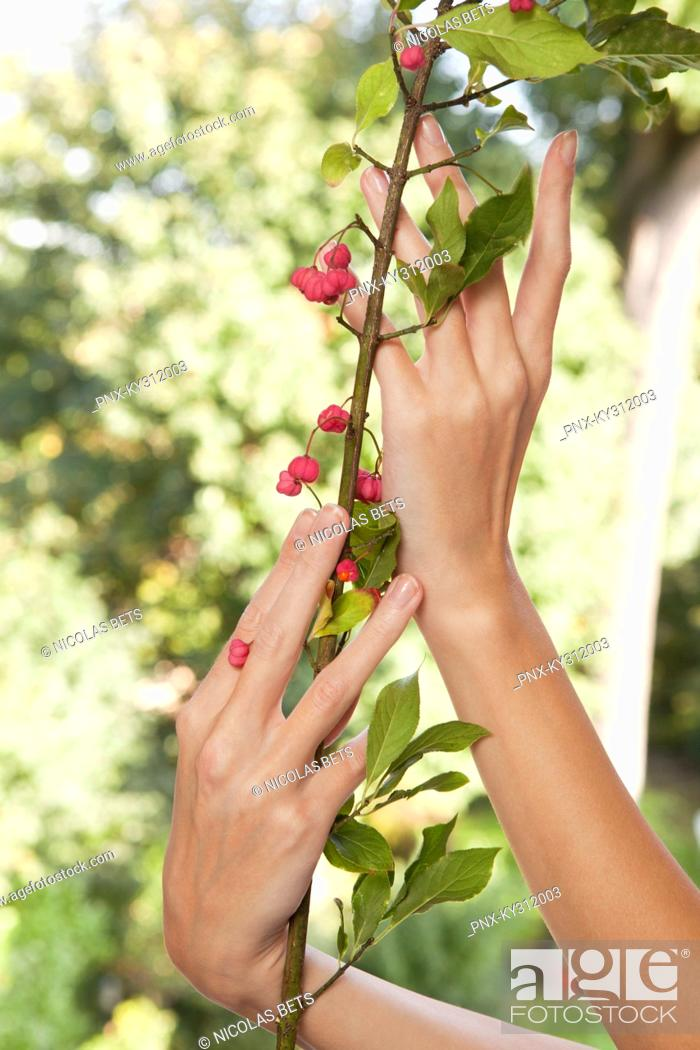 Stock Photo: Close-up of woman's hands holding plant.
