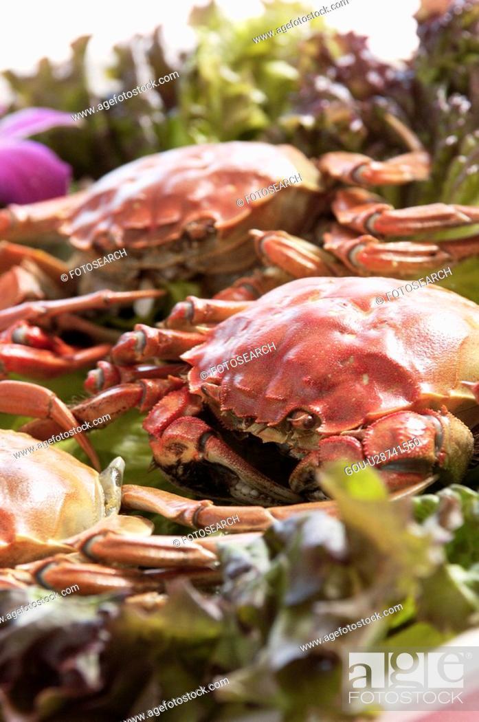 Stock Photo: Crab.