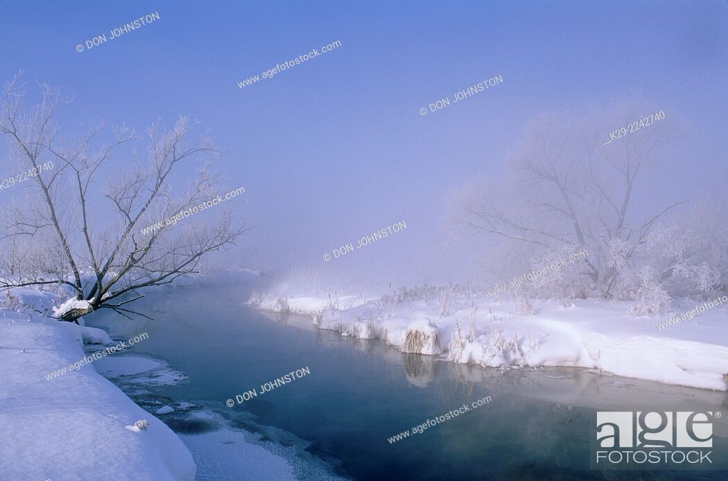 Photo de stock: Foggy Junction Creek shoreline and frosted black willow, Greater Sudbury, Ontario, Canada.