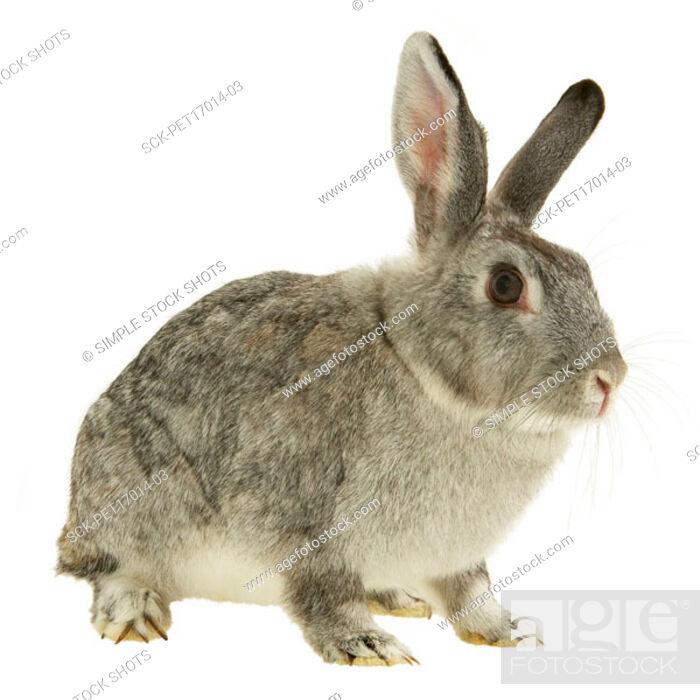 Stock Photo: rabbit.