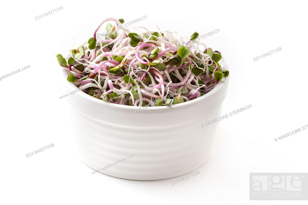 Stock Photo: Fresh pink radish sprouts in a bowl on a white background.