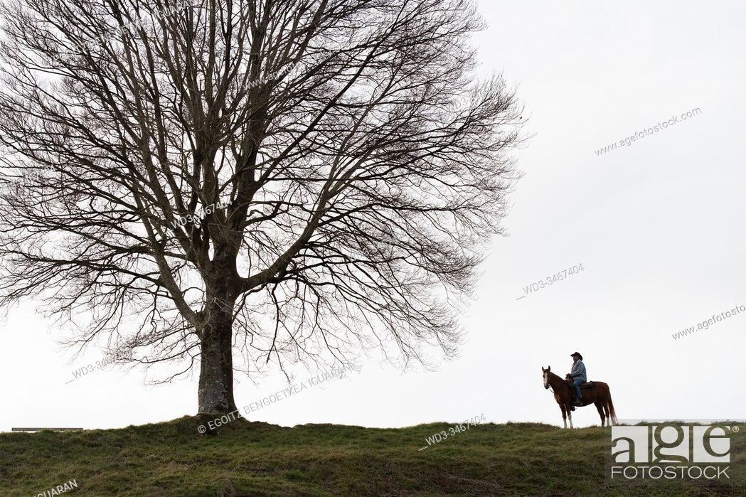 Imagen: Veteran cowboy on his arabian horse in front of a lonely tree.