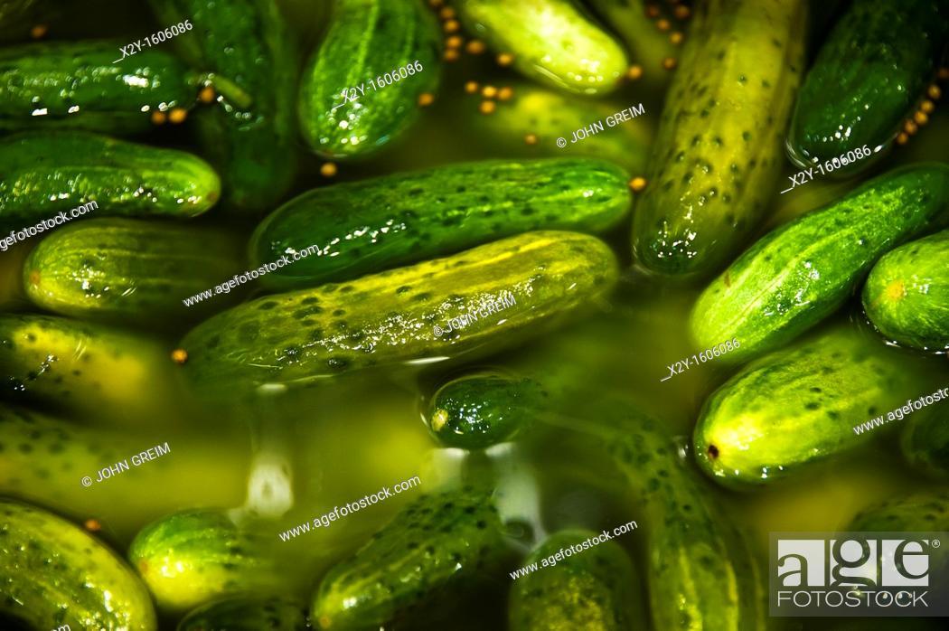 Photo de stock: Barrel of pickles.