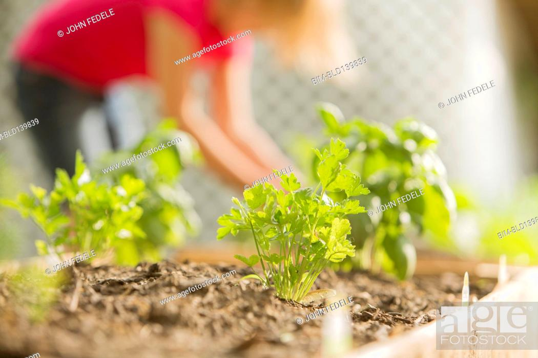 Close up of plants growing in wood box in garden, Stock Photo