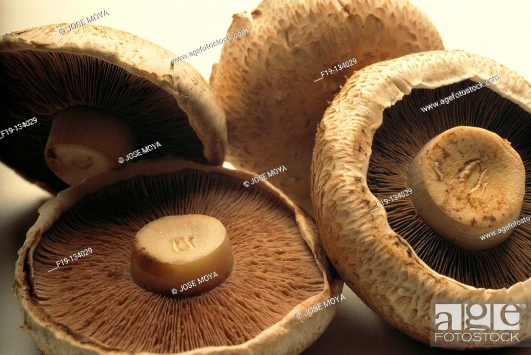Stock Photo: Mushrooms.