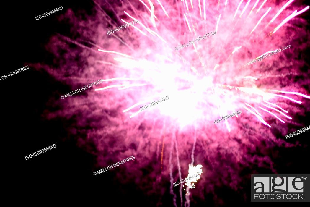 Stock Photo: Pink firework explosion.