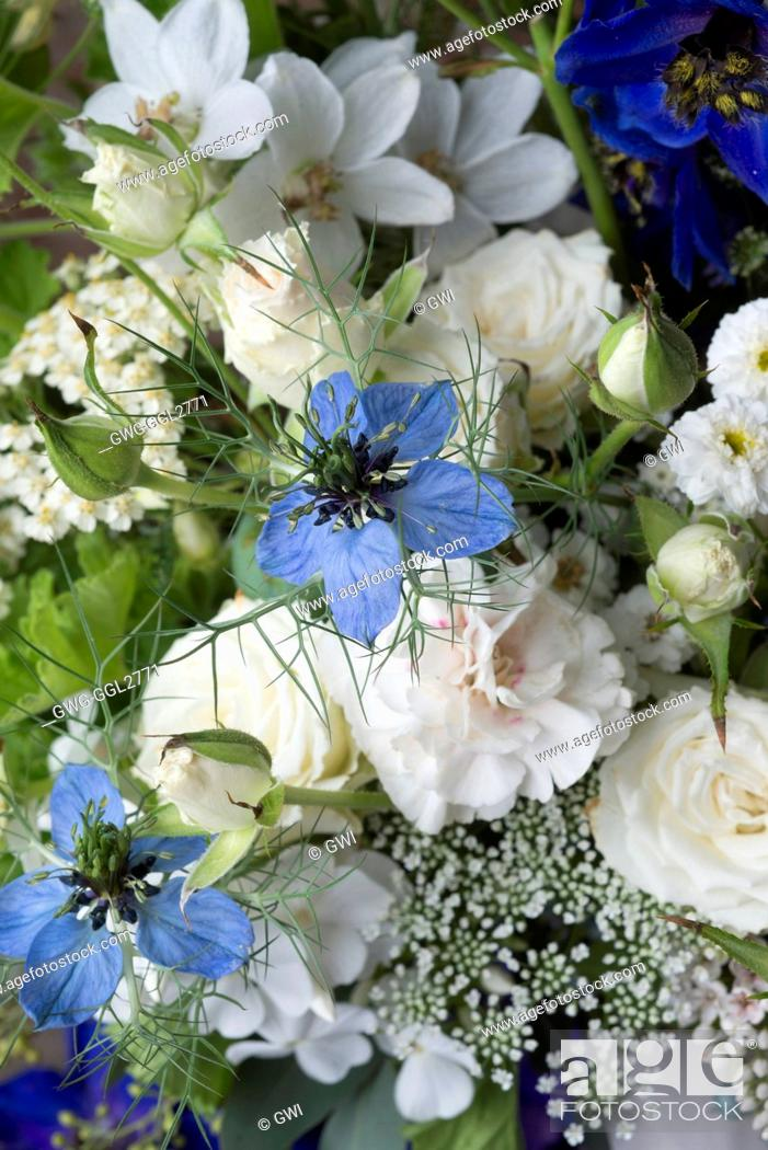 Delphinium pagan purples delphinium blue jay phlox paniculata david stock photo delphinium pagan purples delphinium blue jay phlox paniculata david white roses nigella damascena mightylinksfo
