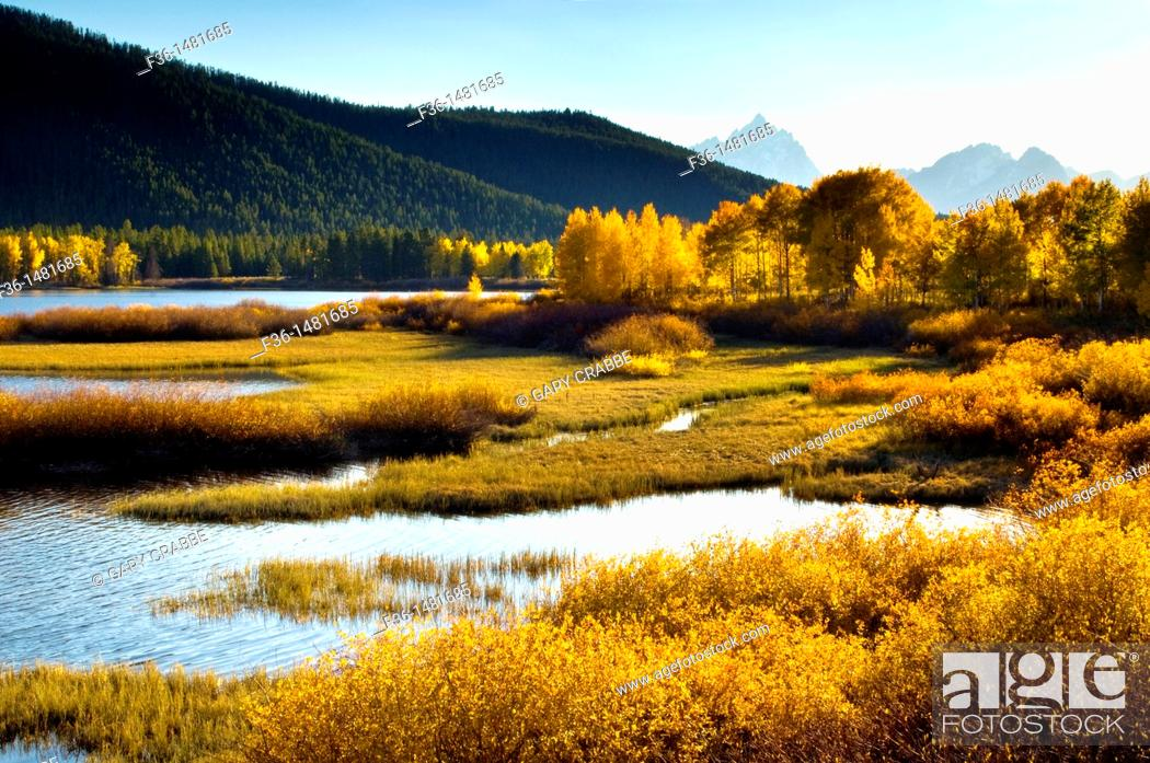 Stock Photo: Golden autumn leaves in fall on trees below the Teton Range mountains, Grand Teton National Park, Wyoming.