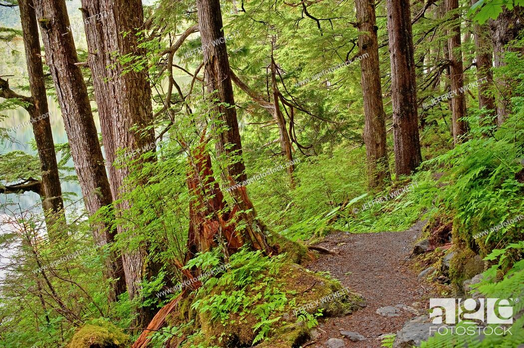 Stock Photo: Beaver lake trail, Tongass National Forest, SE Alaska, near Sitka, Alaska, USA.