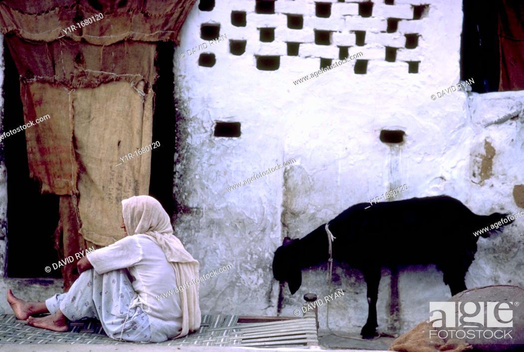 Stock Photo: India, Rajahstan, Man and Goat.