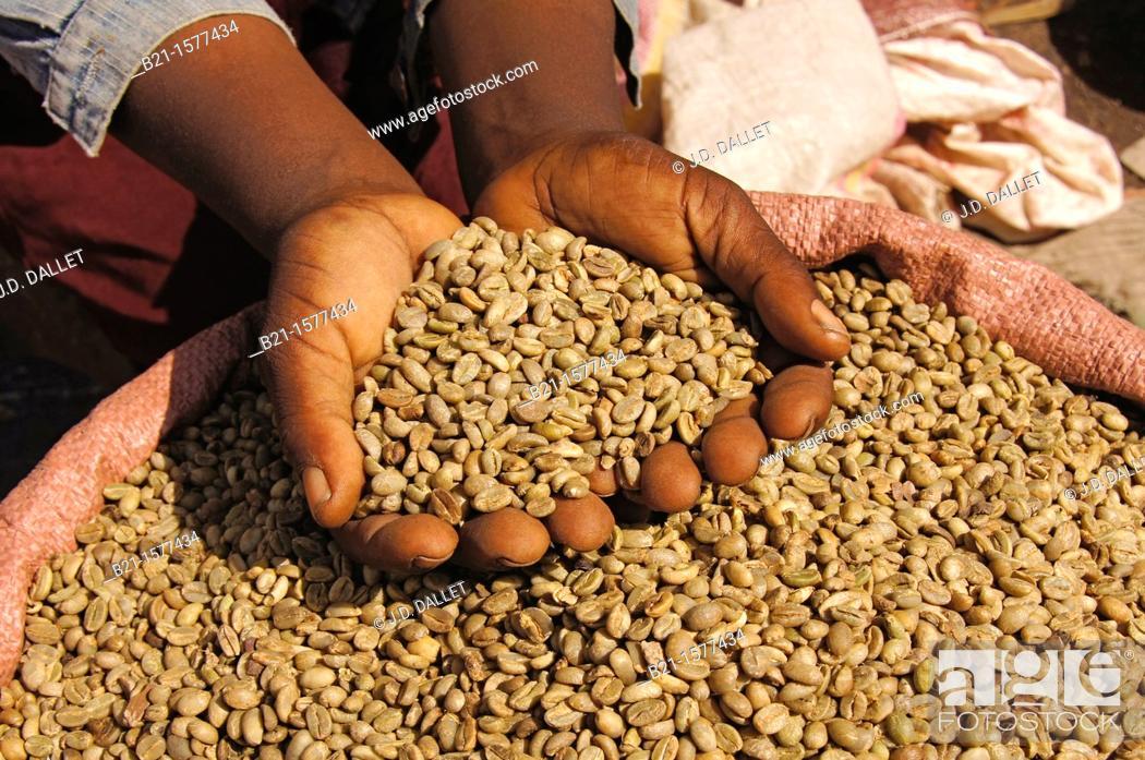 Stock Photo: Coffee marked at Awasa, Ethiopia.