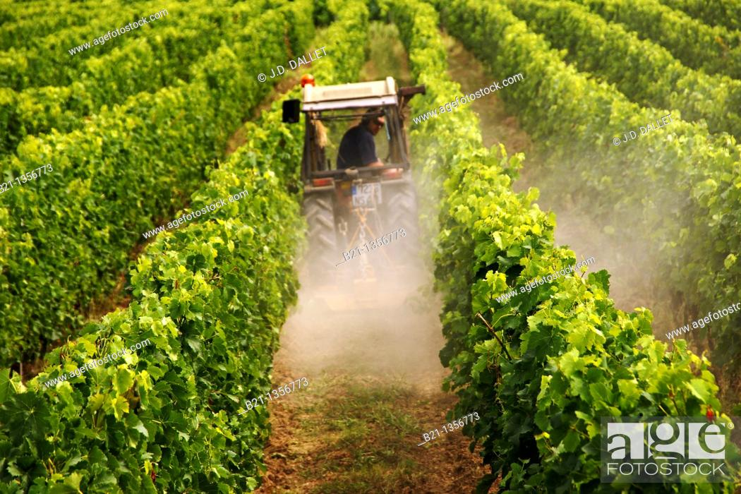 Stock Photo: France, Aquitaine, Gironde, Medoc, plowing in a wine grapes field, at the Margaux area, in the Bordeaux wines district.