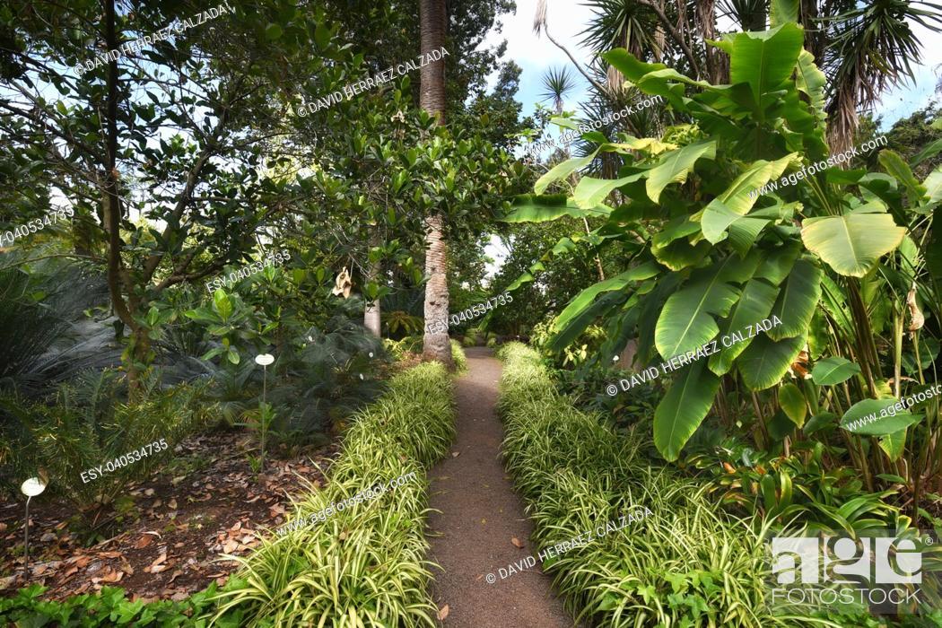 Stock Photo: Botanic garden in Puerto de la Cruz, Tenerife, Canary islands, Spain.