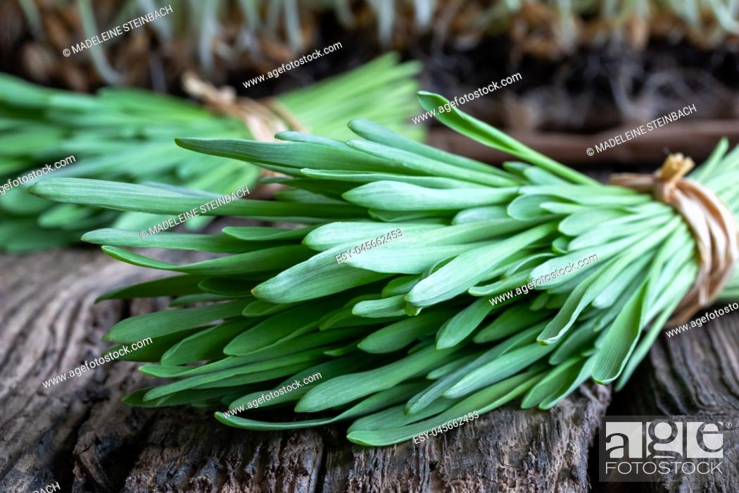 Stock Photo: Freshly harvested barley grass on a wooden background.