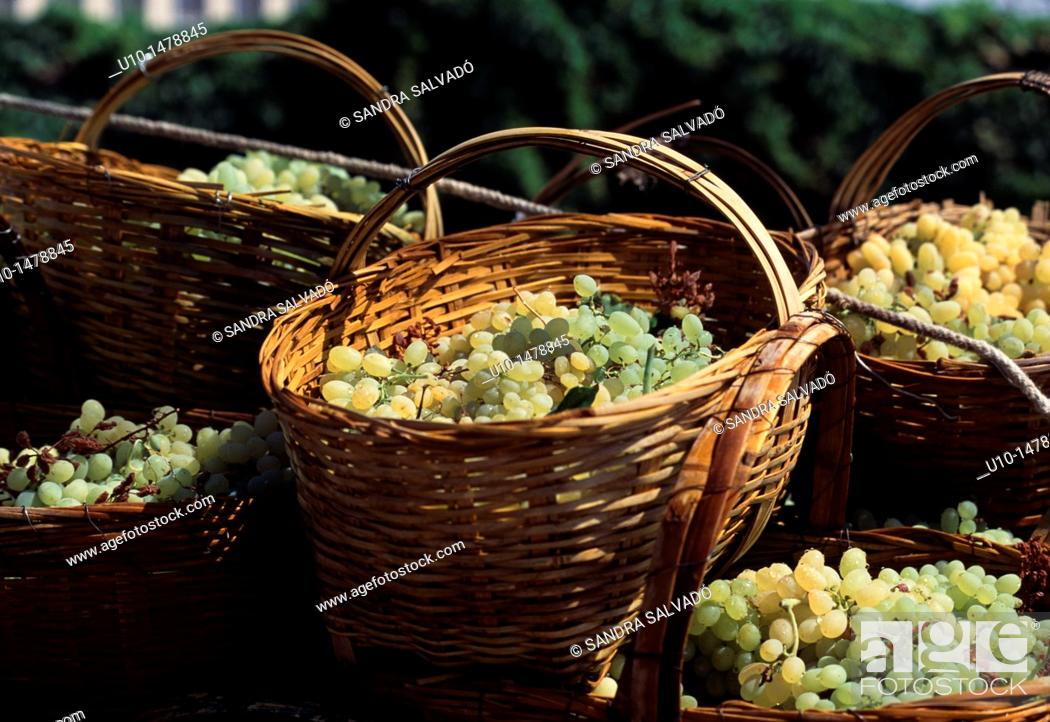 Stock Photo: Grapes, Turpan, Xinjiang.