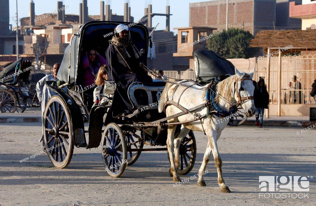 Stock Photo: WHITE EGYPTIAN HORSE & CARRIAGE; EDFU, EGYPT; 09/01/2013.