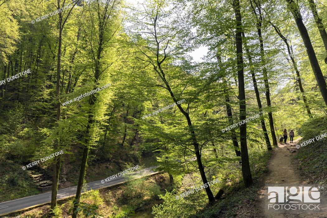 Stock Photo: Europe, Luxembourg, Grevenmacher, Mullerthal Trail and Ernz River near the Schiessentumpel Waterfall.