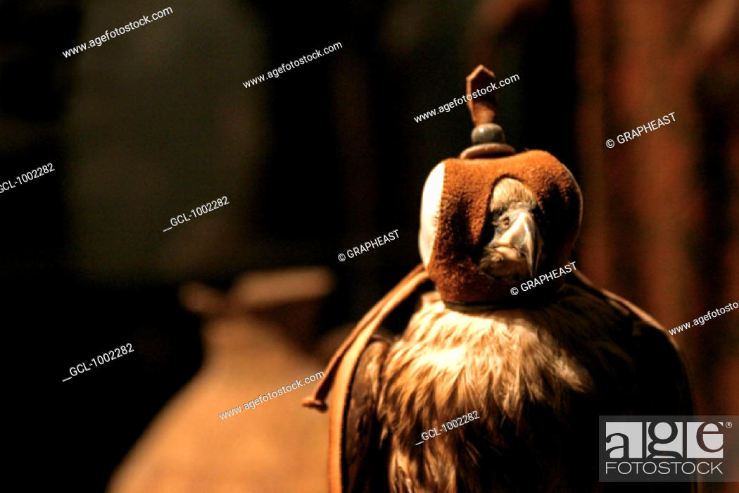 Stock Photo: Falcon in the United Arab Emirates (falconry is an old tradition in the United Arab Emirates).