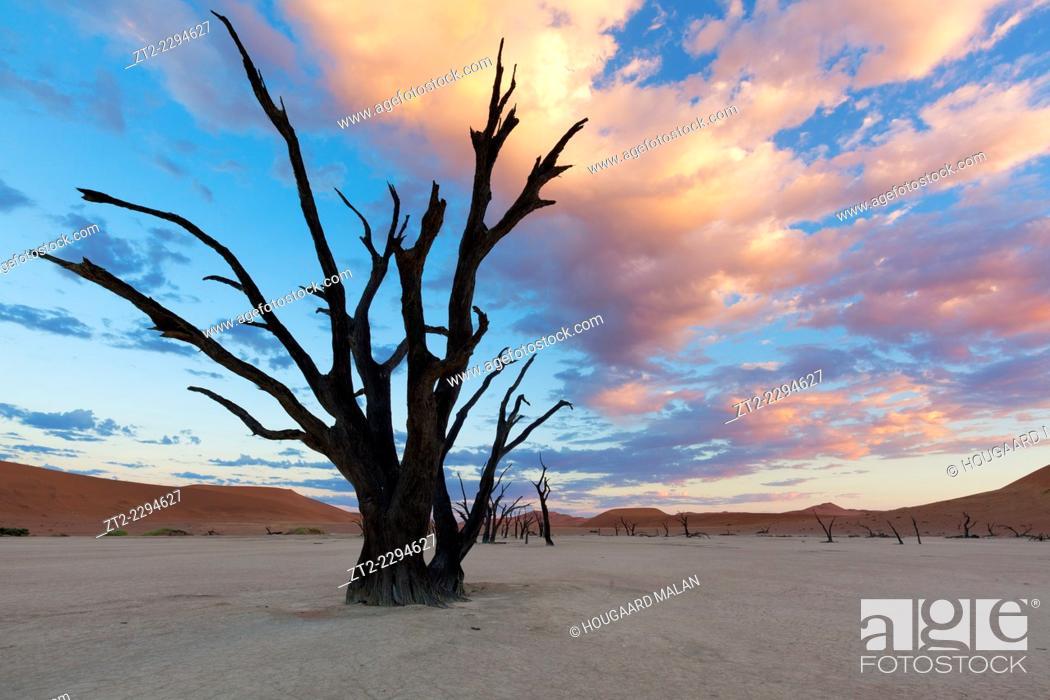 Stock Photo: Landscape photo of a dead tree under a colourful sunrise sky. deadvlei, Namib Naukluft National Park, Namibia.