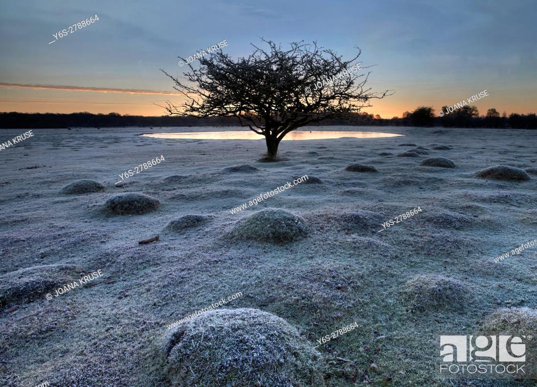 Imagen: Balmer Lawn in sunrise, Brockenhurst, New Forest, Hampshire, England, UK.