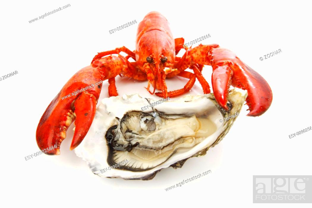 Stock Photo: Lobster and oyster.