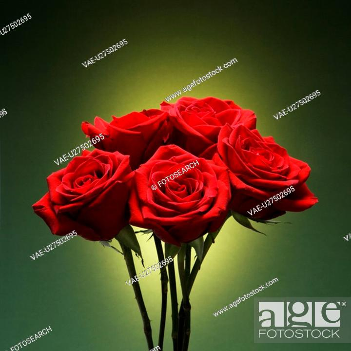 Stock Photo: Bouquet of red roses against glowing green background.
