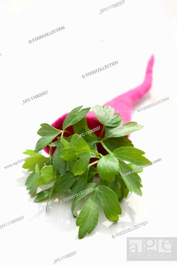 Stock Photo: Lovage Levisticum Officinale in a felt cornucopia.