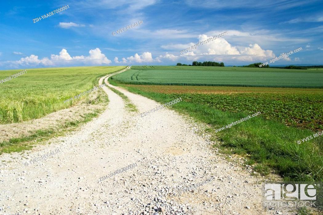 Stock Photo: Dirt road through beautiful countryside.