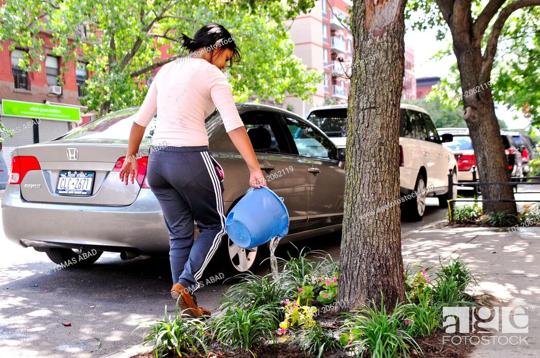 Stock Photo: Hispanic community service volunteers of the Harlem Spanish Manhattan Seventh Day Adventist Church plant flowers and landscape an East Harlem neighborhood.
