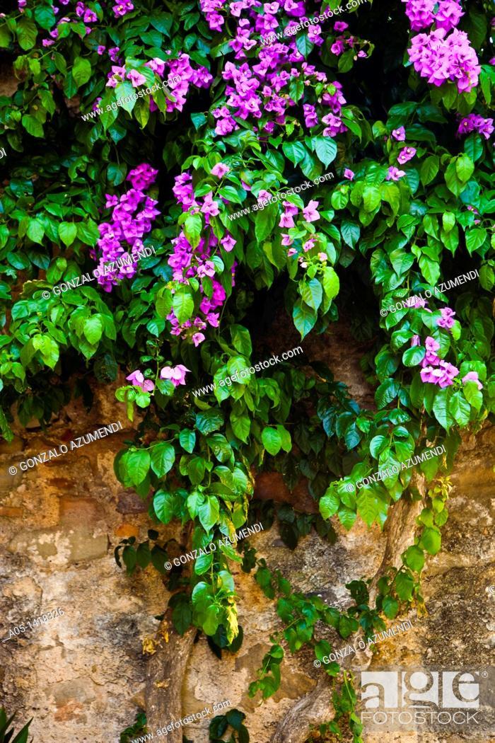 Gardens of the Castle of Púbol, Gala- Salvador Dalí Foundation ...